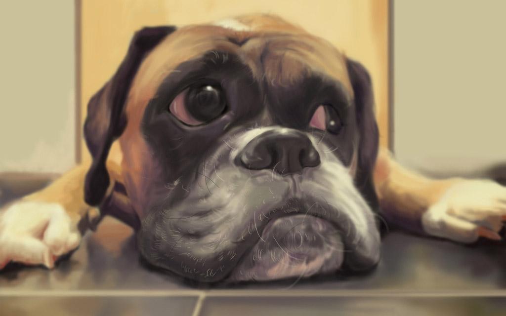 华南首例角膜热成形术治疗犬大疱性角膜炎