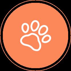 宠物SPA服务